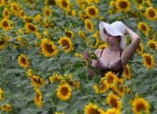 Sunflovers
