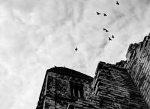 Historical birds