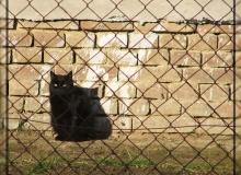 Macska-jajj